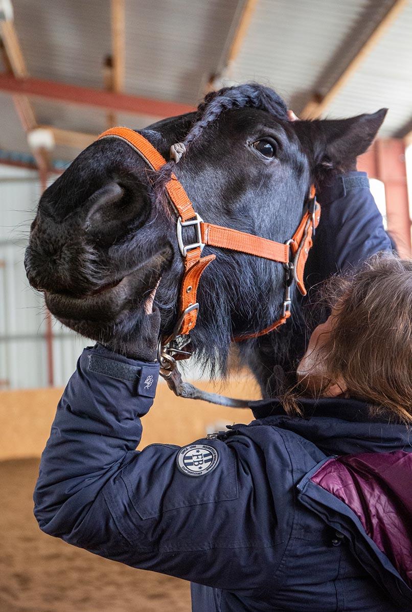 Pferde-Osteopathie-3